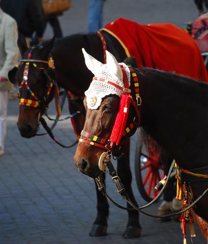 yarn bombing horses