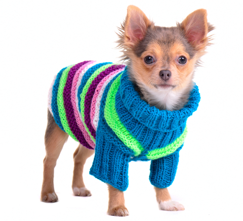 The Crochet Dog Sweater ? Fashion or Warmth?